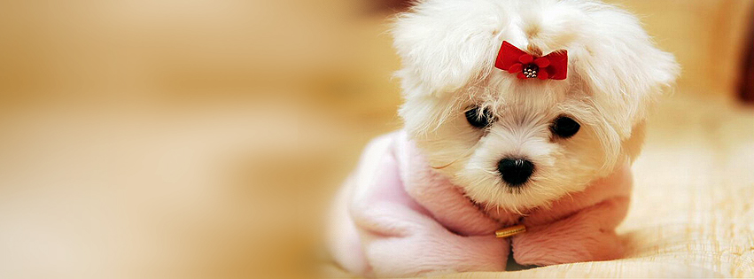 Cute cover photos for facebook timeline timeline cover photo maker cute white puppy facebook cover photo thecheapjerseys Image collections