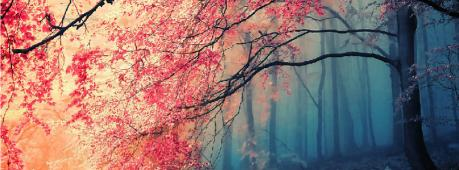 Beautiful Forest Facebook Cover Photo