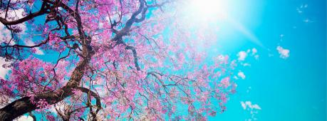 Pink Flower Tree Facebook Cover Photo