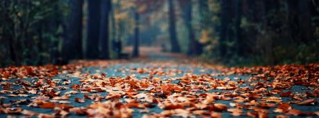 Road In Autumn Facebook Cover Photo