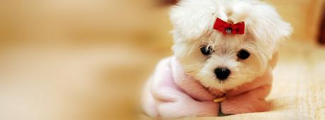 Cute White Puppy Facebook Cover Photo